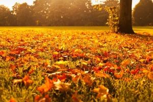 autumn-72736_640